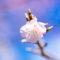 桜の写真2021